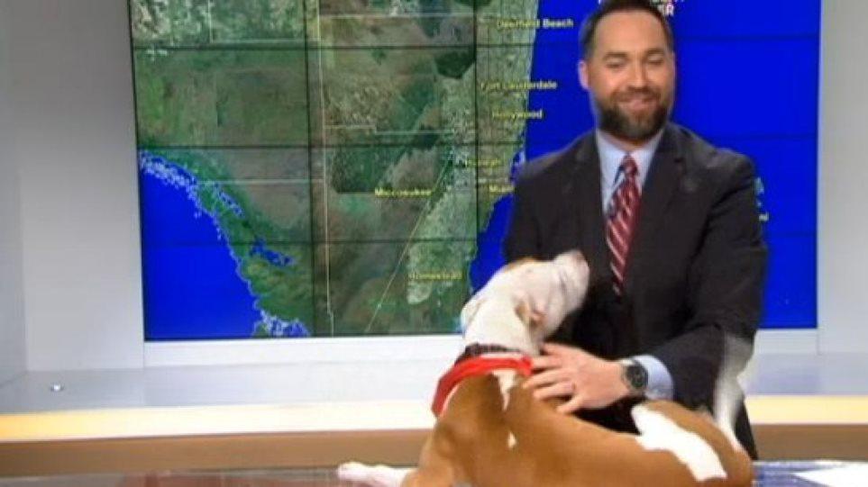 Σκύλος μπαίνει σε τηλεοπτικό πλατό και διακόπτει το δελτίο καιρού!