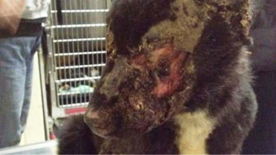 Πανελλήνια συγκίνηση και ενδιαφέρον για τον σκύλο που τύφλωσαν με οξύ