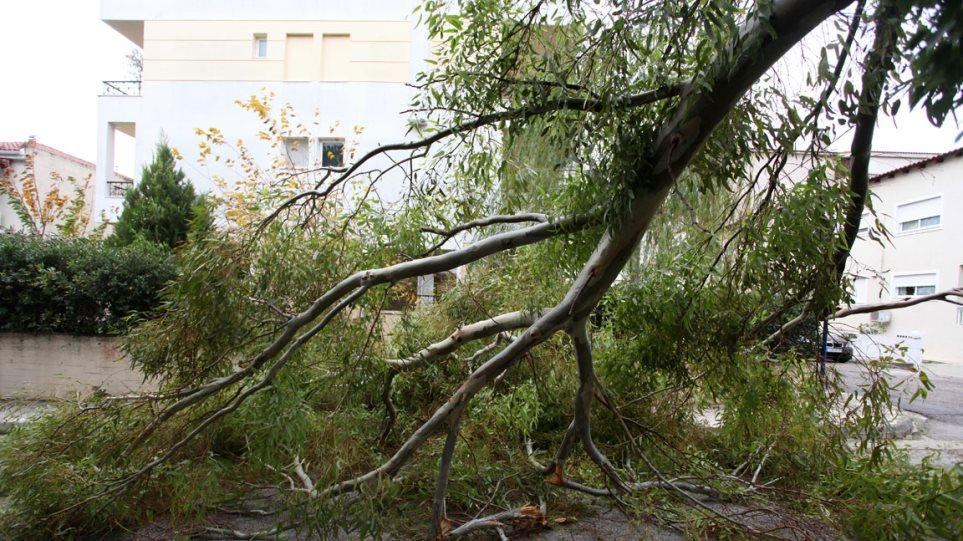 Μας... πήρε και μας σήκωσε: 113 δέντρα έπεσαν μόνο στην Αττική!