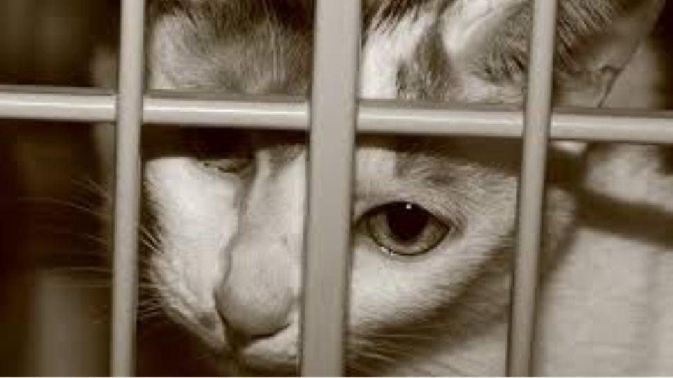 Βιετνάμ: Χιλιάδες γάτες εισήχθησαν παράνομα από την Κίνα προκειμένου να  «καταναλωθούν»
