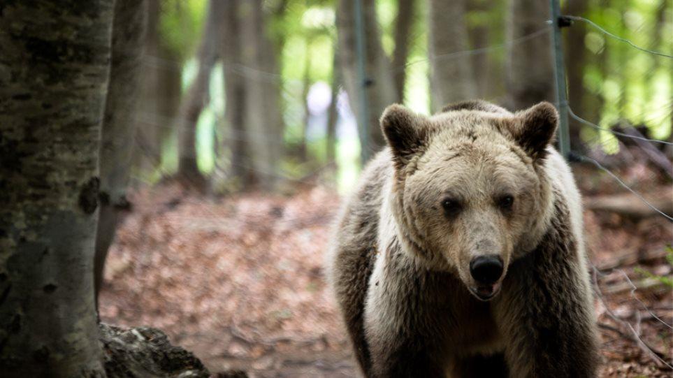 Οι αρκούδες... «μύρισαν» Άνοιξη και ξύπνησαν!