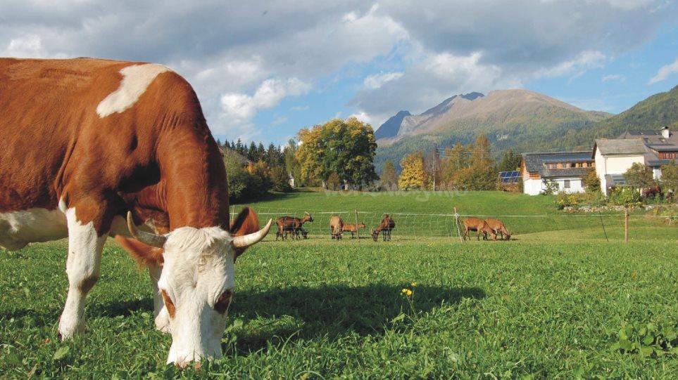 πιστωτική Agricole χρονολόγηση