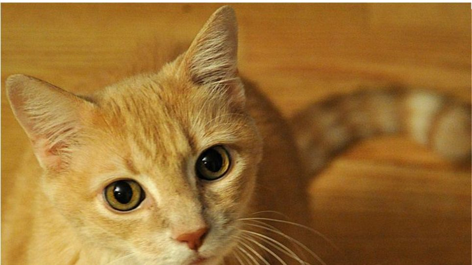 Έχετε γάτα; Μπορεί να πάθετε σχιζοφρένεια!