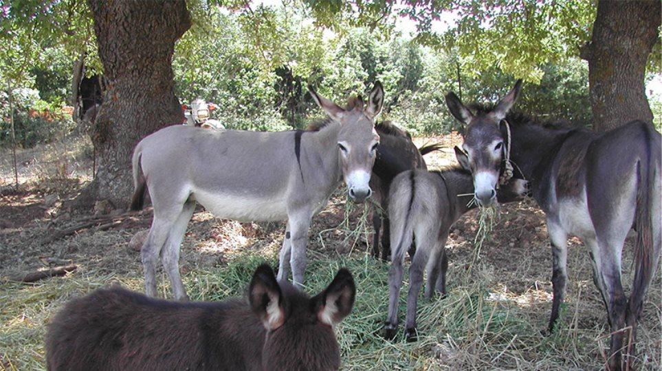 Αριθμός κυκλοφορίας για... άλογα, γαϊδούρια και μουλάρια στη Λέρο
