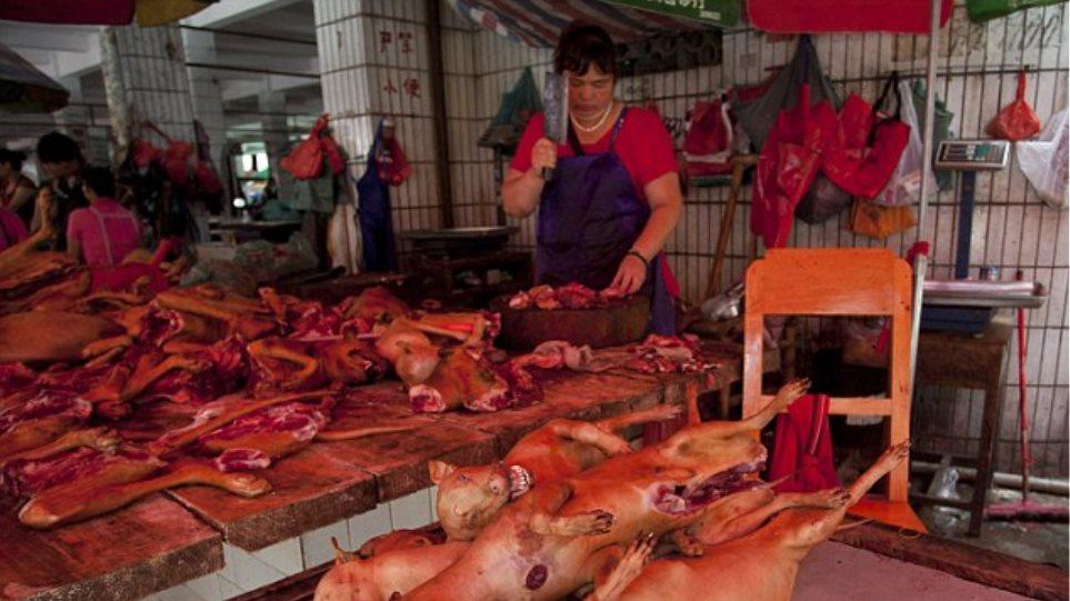 Απόλυτη κτηνωδία: Χιλιάδες σκυλιά δέρνονται μέχρι θανάτου στο ετήσιο «Φεστιβάλ Σκυλίσιου Κρέατος» της Κίνας