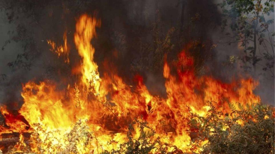 Αίγιο: Μικρή φωτιά σε αγροτοδασική έκταση