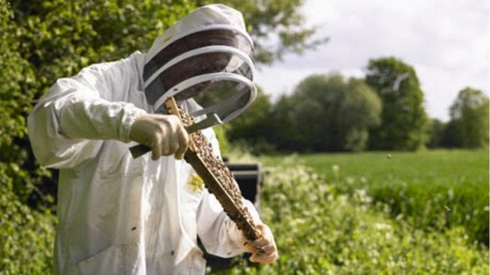 Μελισσοκόμος εμπρηστής συνελήφθη στην Ακράτα