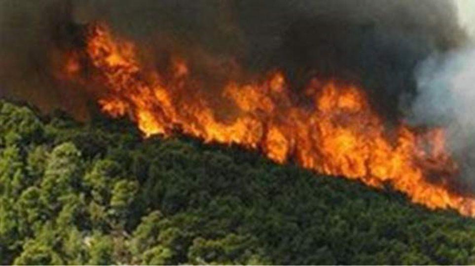 Φωτιά σε δύσβατο σημείο στην Πύλα Κυπαρισσίας