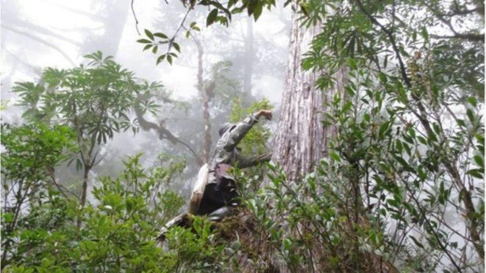 Τρία τρισεκατομμύρια δέντρα στον πλανήτη - Οκταπλασιάστηκε ο αριθμός τους