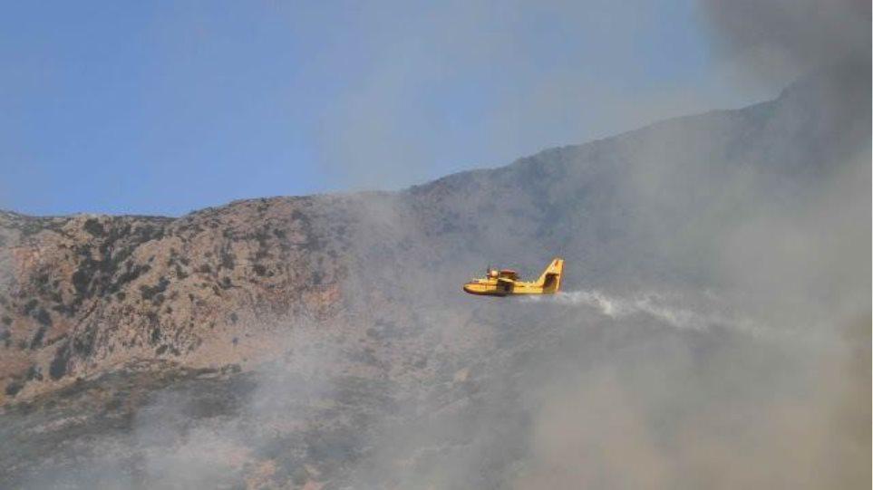 Λαμία: Συναγερμός για πυρκαγιά σε Παλαιοχώρι - Λιμογάρδι