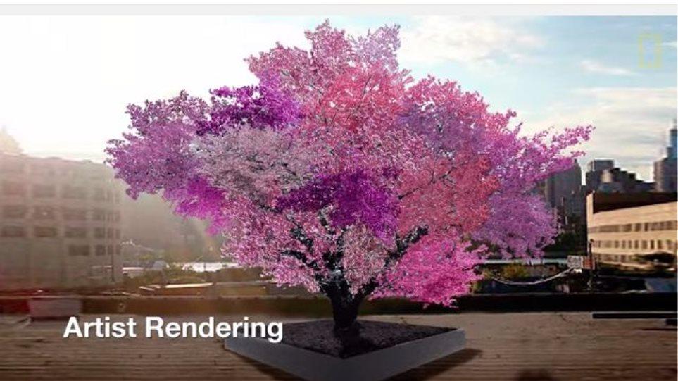 Βίντεο: Δείτε το δέντρο που κάνει... 40 διαφορετικά φρούτα!