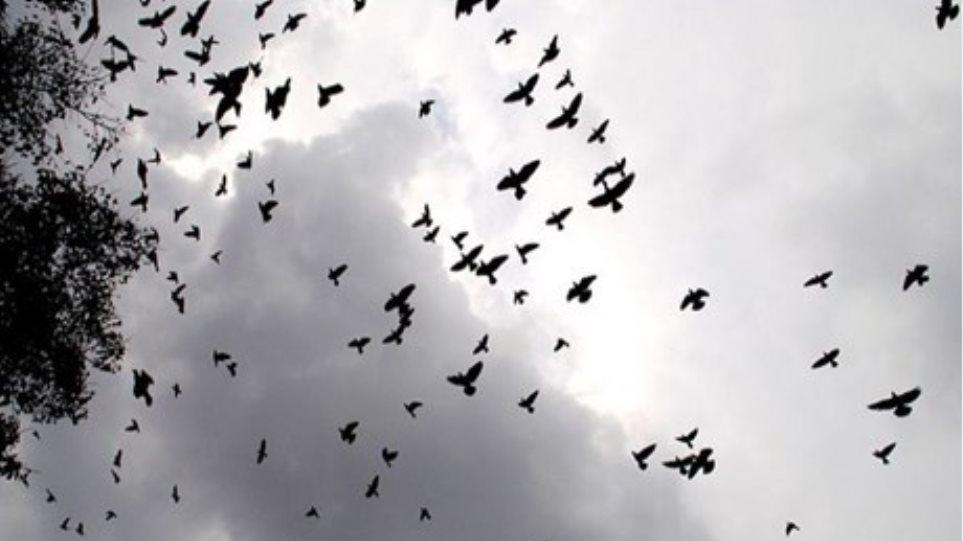 πρώτο τεράστιο μαύρο πουλί πρωκτικό αυνανισμός πορνό