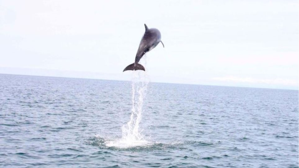 Δείτε καρέ-καρέ το δελφίνι που κάνει άλμα 4,5 μέτρων έξω από τη θάλασσα