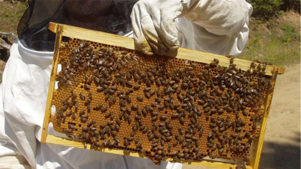 «Γλυκιά» απάτη με μέλι από παραγωγό στα Χανιά