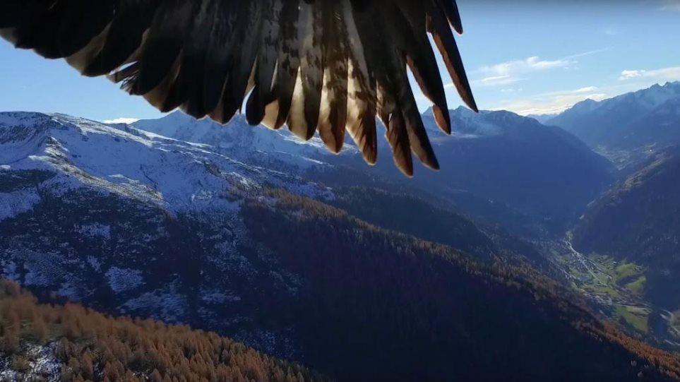 Πώς να χειριστεί ένα μεγάλο πουλί καλή πίπα συμβουλές