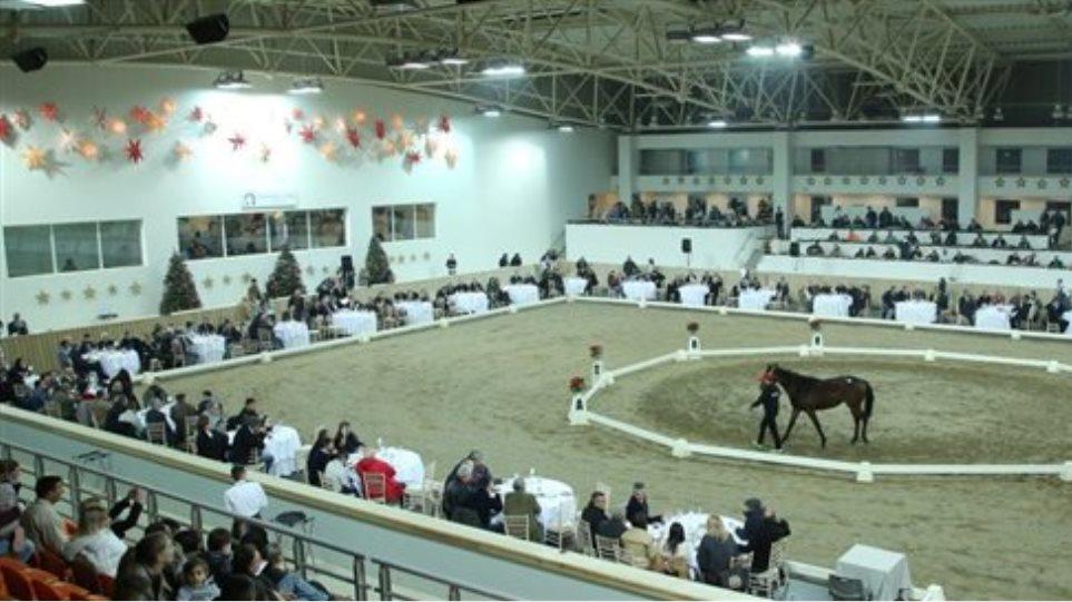Μεγάλη επιτυχία στη δημοπρασία αλόγων στο Μαρκόπουλο
