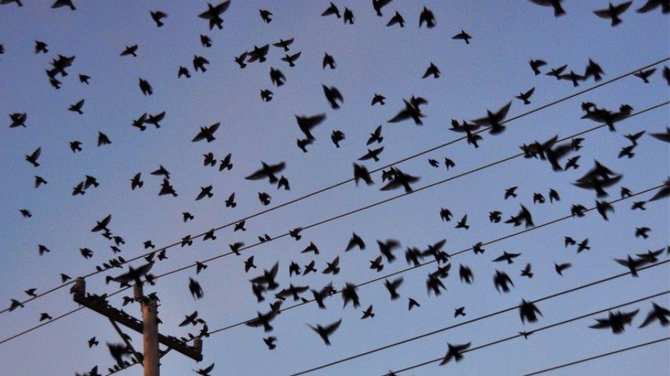 Πότε και πού πέταξαν για πρώτη φορά τα σύγχρονα πουλιά