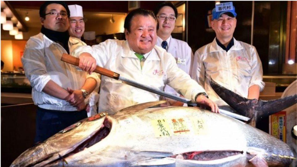 Ιαπωνία: Εστιατόριο σούσι αγόρασε έναν τόνο 200 κιλών για... 117.000 δολάρια