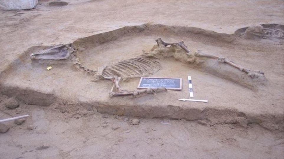 Ταφή αλόγου και άλλα ευρήματα αποκαλύφθηκαν στο Φαληρικό Δέλτα