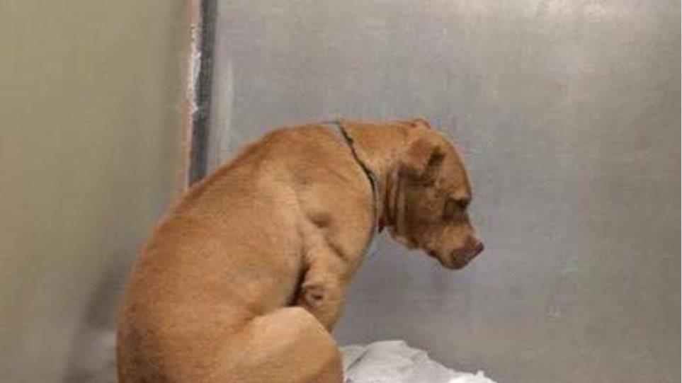 Ο θλιμμένος σκύλος: Ραγίζει καρδιές η ιστορία πίσω από αυτή τη φωτογραφία