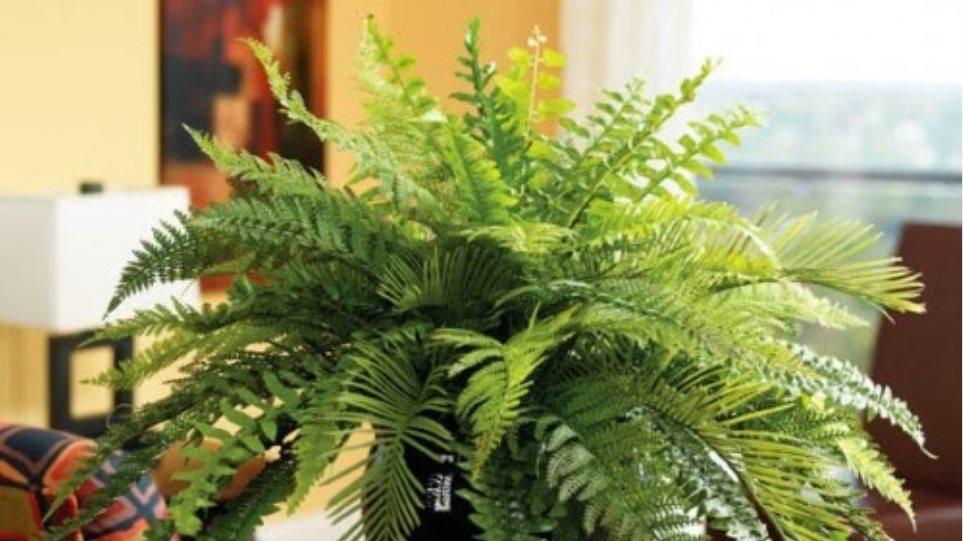 Κρήτη: Κλέβουν καλλωπιστικά φυτά από χώρους επιχειρήσεων
