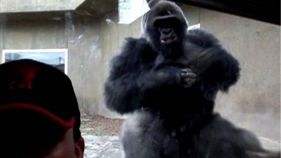Βίντεο: Δείτε την τρομακτική επίθεση ενός γορίλα εναντίον ανυποψίαστου τουρίστα