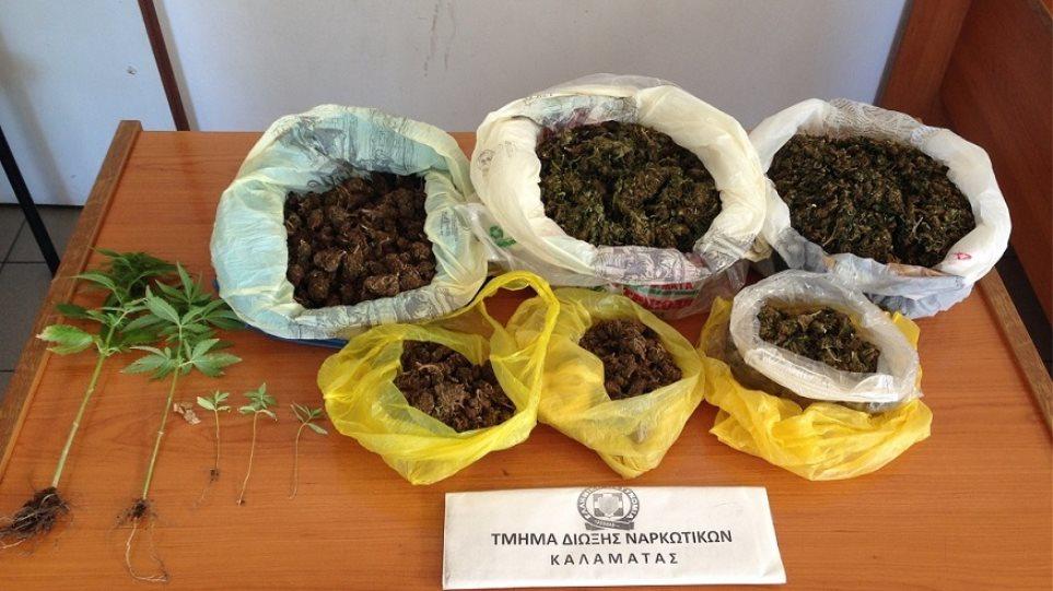 Μεσσηνία: Χασισοκαλλιεργητής τρύγησε ενάμισι κιλό χασίς