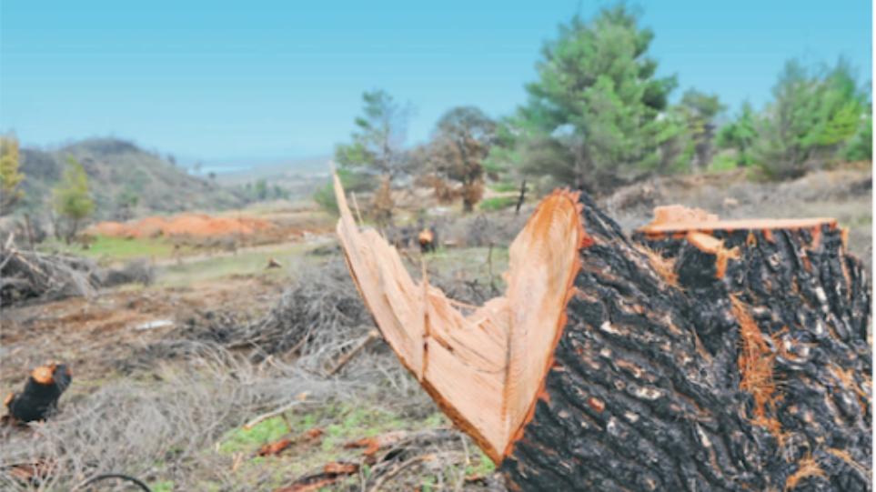 «Εξαφάνισαν» ιδιόκτητα δέντρα στην περιοχή της Αιγιαλείας!