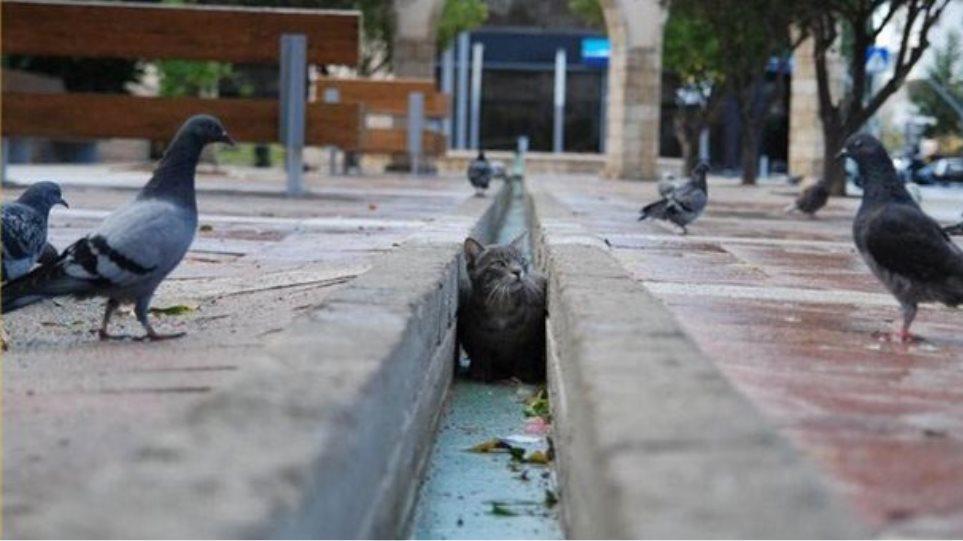 833a8f5e3b82 Δυο χρόνια φυλακή και 5.000 ευρώ πρόστιμο στον άνδρα που σκότωσε τη γάτα  της γειτόνισσάς του