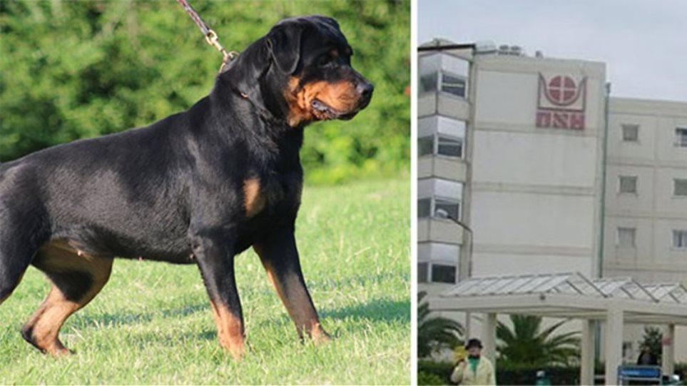 7791ea0b36e «Πρόλαβα και πήρα γρήγορα το παιδί από τα δόντια του σκύλου...», λέει ο  πατέρας του παιδιού