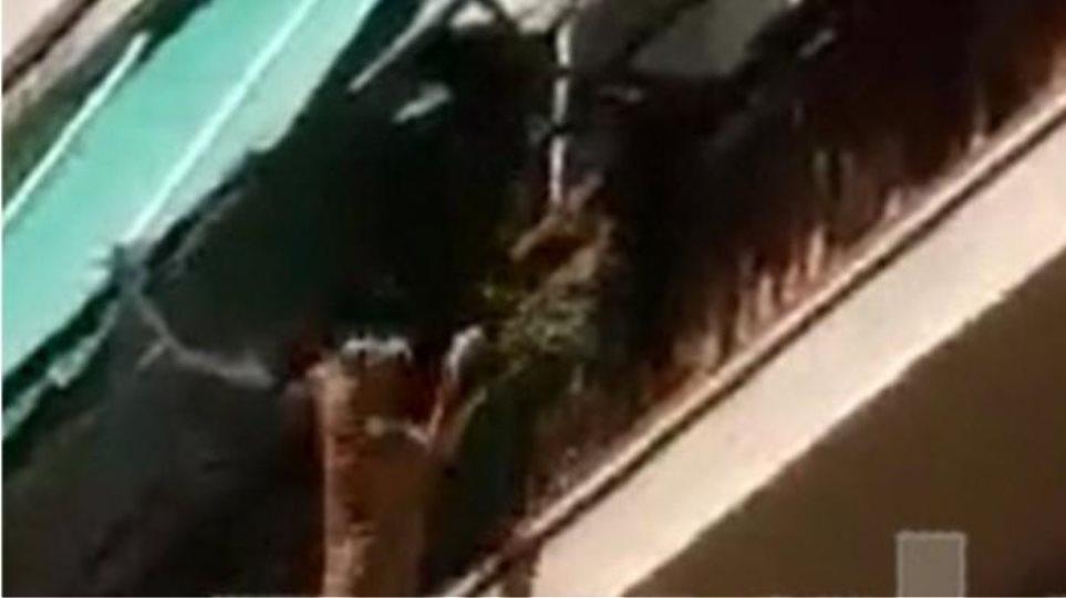 Αδιανόητη κτηνωδία: Άνδρας κακοποιεί σκυλάκι και μετά το πετά από τον 3ο όροφο!