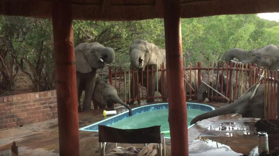 Βίντεο: Κοπάδι ελεφάντων «δροσίζεται» σε πισίνα οικογένειας