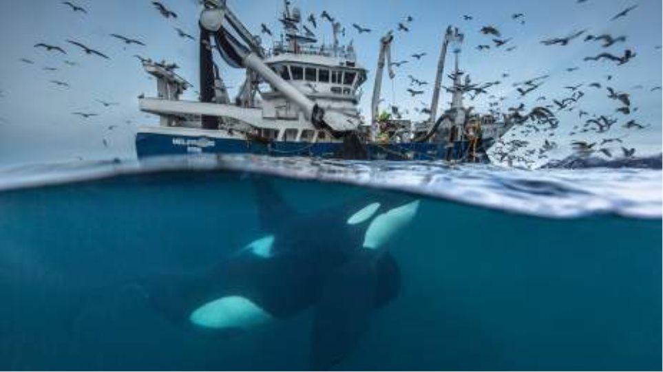 Wildlife Photographer Of The Year: Δείτε έντεκα από τις καλύτερες φετινές φωτογραφίες
