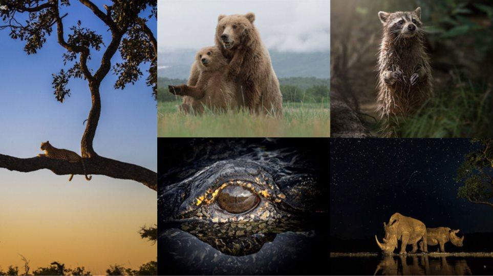 Το μεγαλείο της φύσης μέσα από μερικά κλικ
