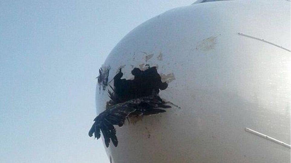 Απίστευτο: Δείτε τη ζημιά που προκάλεσε αετός που καρφώθηκε στη μύτη αεροπλάνου!