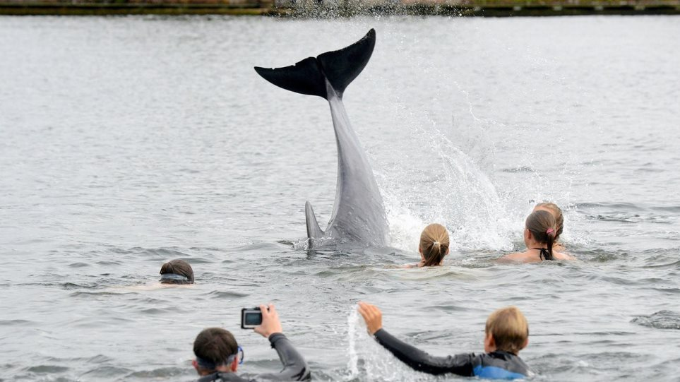Βίντεο: Δείτε το δελφίνι που κολυμπάει με λουόμενους στη Γερμανία