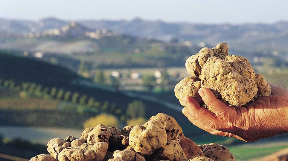 Οι βροχές στην Ιταλία έριξαν την τιμή της τρούφας - Αυξήθηκε η παραγωγή