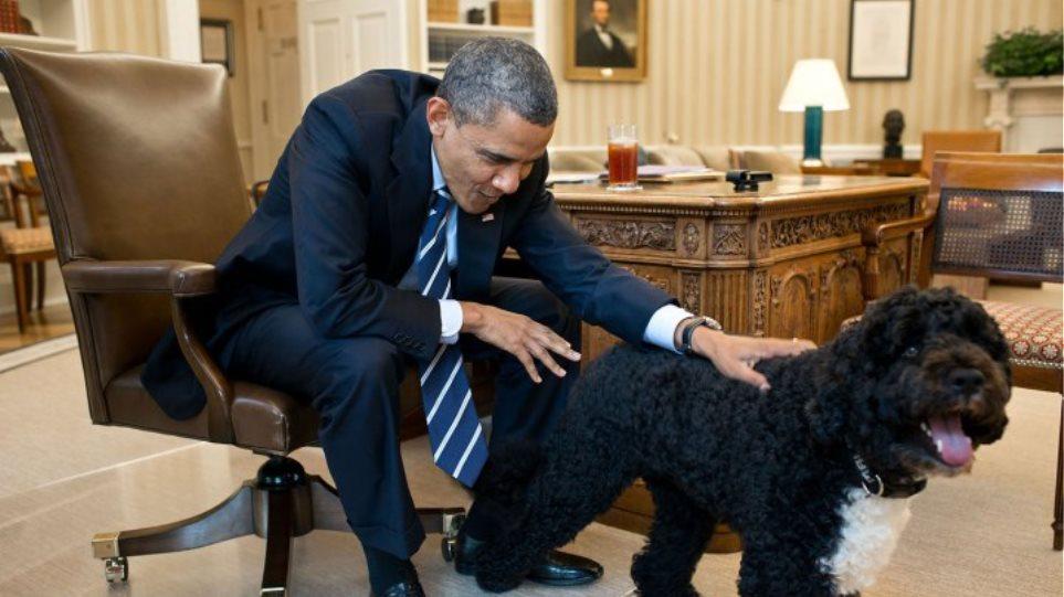 Resultado de imagen para perro de agua obama