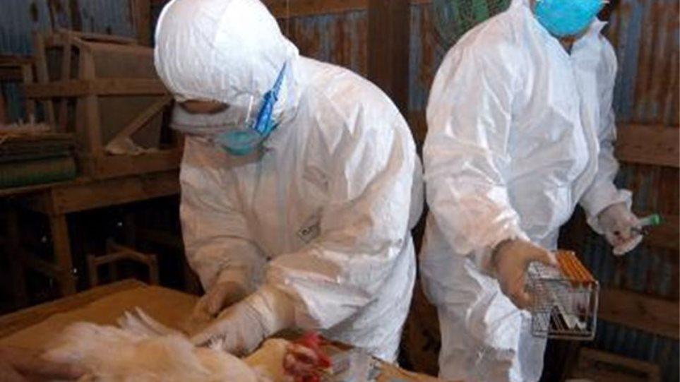 Κρούσμα γρίπης των πτηνών σε μικρή μονάδα πουλερικών στην Κοζάνη