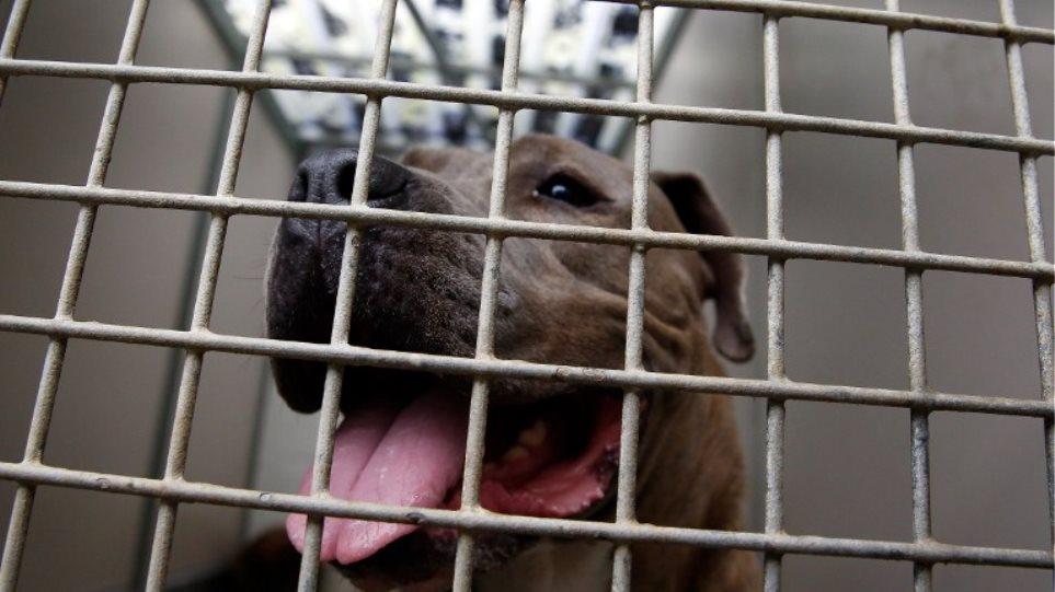 Φρικιαστικός θάνατος Κύπριου στο Λονδίνο: Τον δάγκωσε ο σκύλος του στον λαιμό