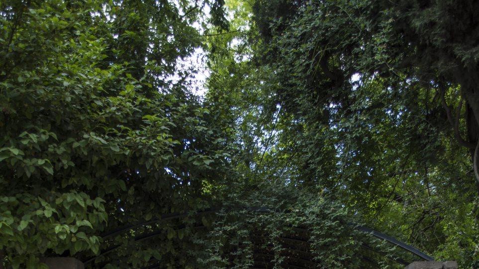 Θρίλερ στον Εθνικό Κήπο: Βρέθηκαν οστά άνδρα που είχε εξαφανισθεί από τον Σεπτέμβριο του 2015