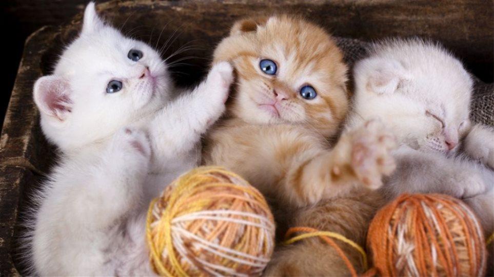 Παραιτηθείτε από τη δουλειά σας και πληρωθείτε για να αγκαλιάζετε γάτες όλη μέρα!