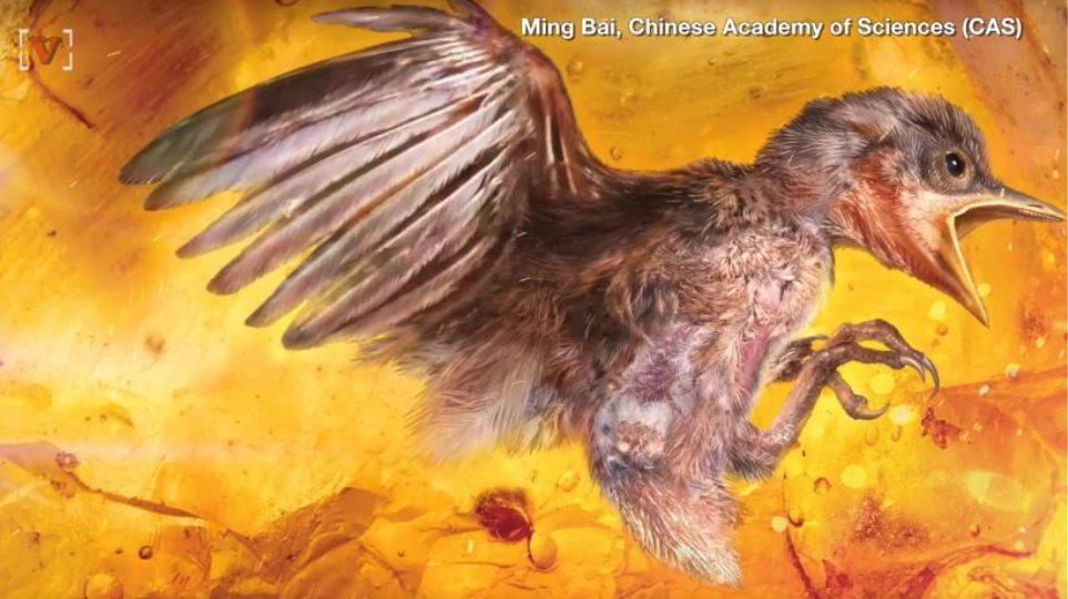 Πώς να κάνει το πουλί σας να πάρει μεγάλο