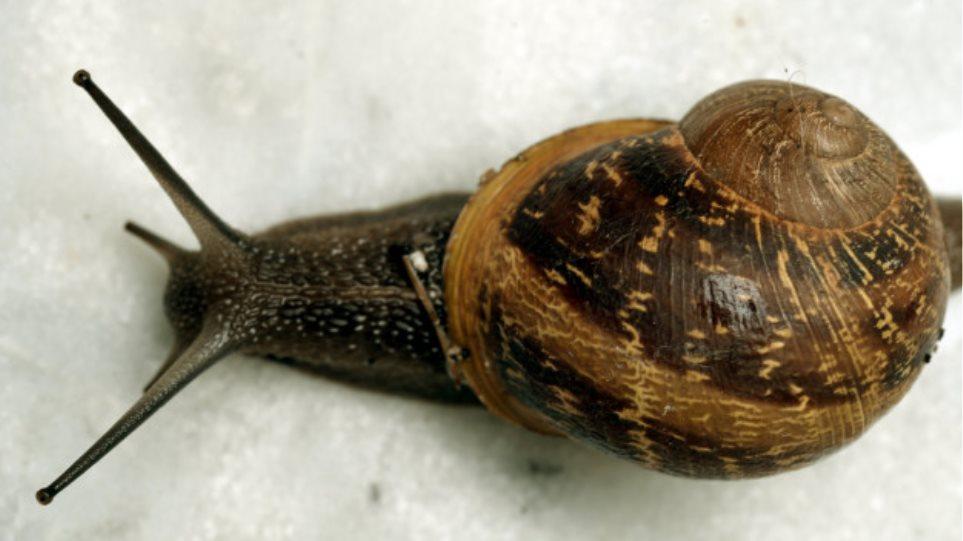 Ταχύτητα χρονολογείται περιοχή της Νότιας Ουαλίας Ταχύτητα dating νέο δάσος