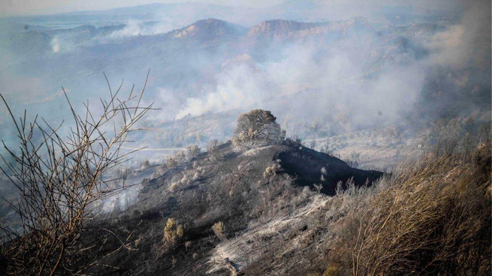 Χωρίς ενεργό μέτωπο η φωτιά στην ανατολική Αττική: Έγιναν στάχτη 18.500 στρέμματα