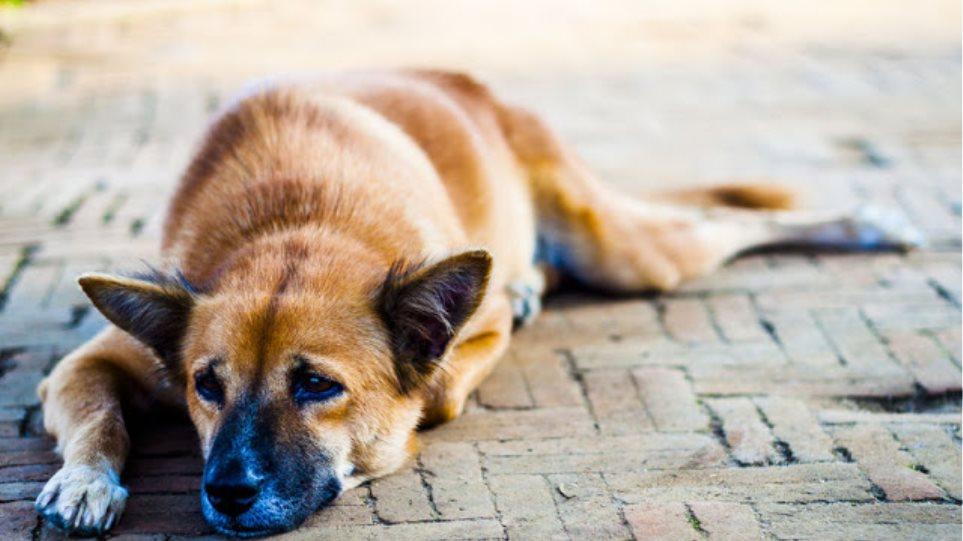 Πυροβόλησαν αδέσποτα σκυλιά στην Λαμία