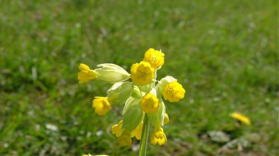 Ήπειρος  Στο έλεος κυκλωμάτων από την Αλβανία τα αρωματικά φυτά 0783e17f282