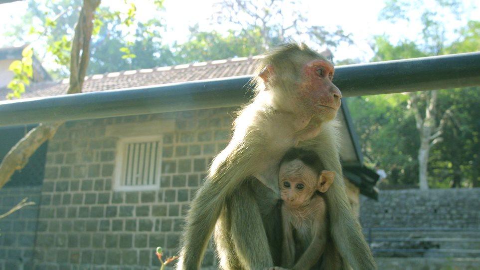 Η «θεωρία των άκρων» στα ζώα: Τα πιο μεγάλα και τα πιο μικρά κινδυνεύουν με εξαφάνιση