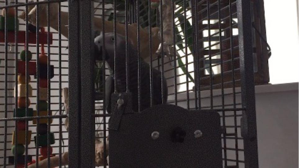 Βρετανία: Απίστευτος παπαγάλος έκανε παραγγελία στην Amazon!
