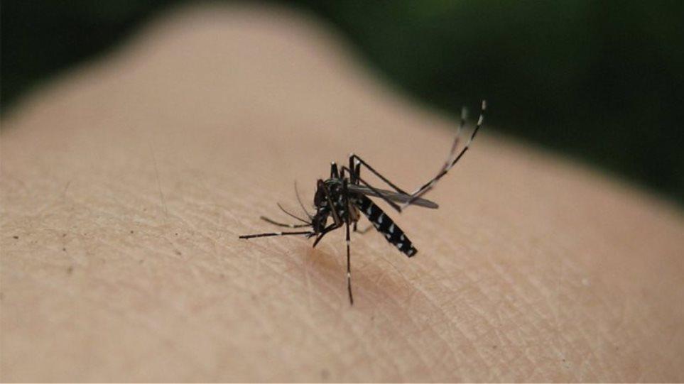 Τρομάζει ο ιός του Δυτικού Νείλου - Πέντε τα θύματά του